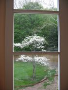 Thru_my_window_may_1a_1